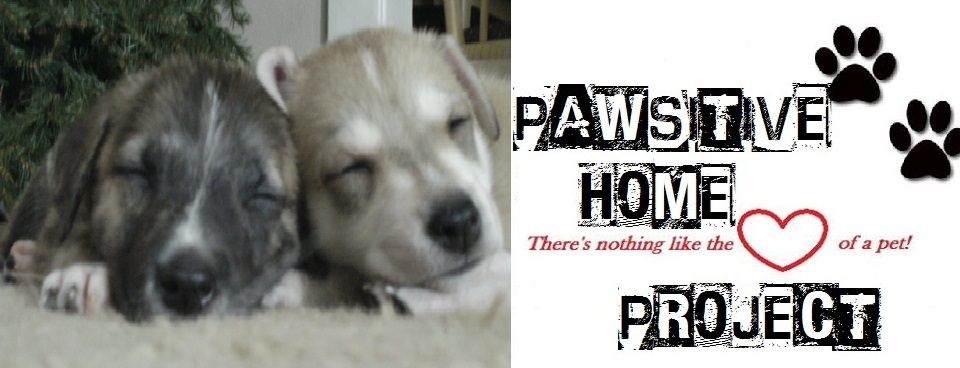 pawsitive home 5